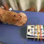 ディーン君の治療   〜犬のヘルニア電気鍼治療
